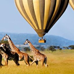 Measure of human progress…